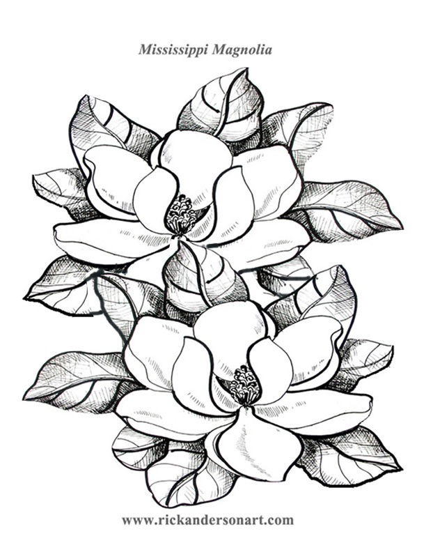 magnolia tree coloring pages - photo#4